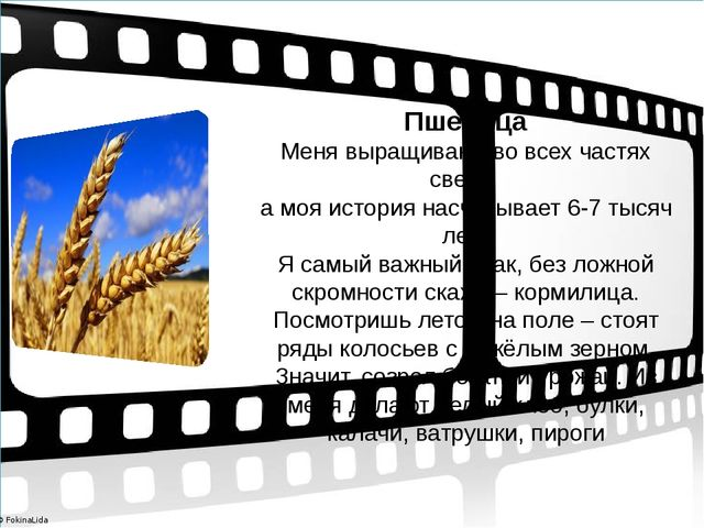 Пшеница Меня выращивают во всех частях света, а моя история насчитывает 6-7...