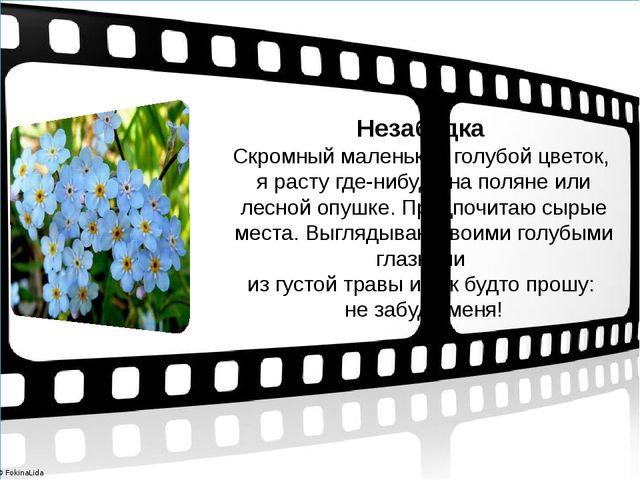 Незабудка Скромный маленький голубой цветок, я расту где-нибудь на поляне ил...