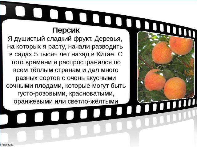 Персик Я душистый сладкий фрукт. Деревья, на которых я расту, начали разводит...