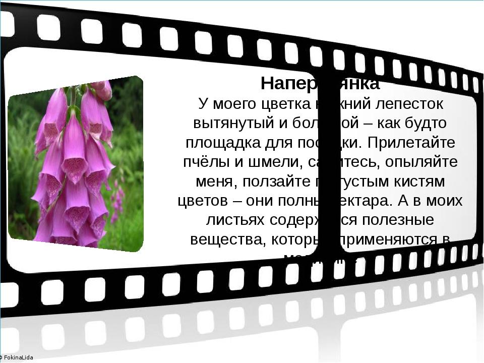 Наперстянка У моего цветка нижний лепесток вытянутый и большой – как будто п...