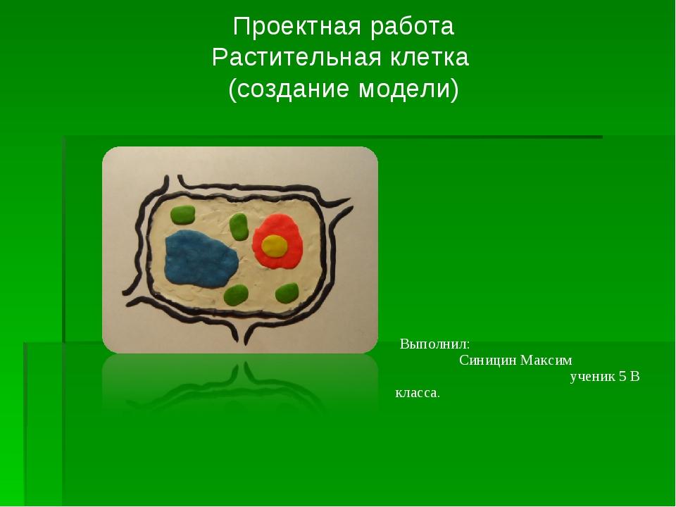 Проектная работа Растительная клетка (создание модели) Выполнил: Синицин Макс...