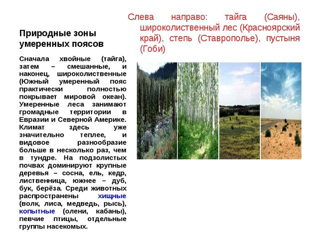 Природные зоны умеренных поясов Слева направо: тайга (Саяны), широколиственны...