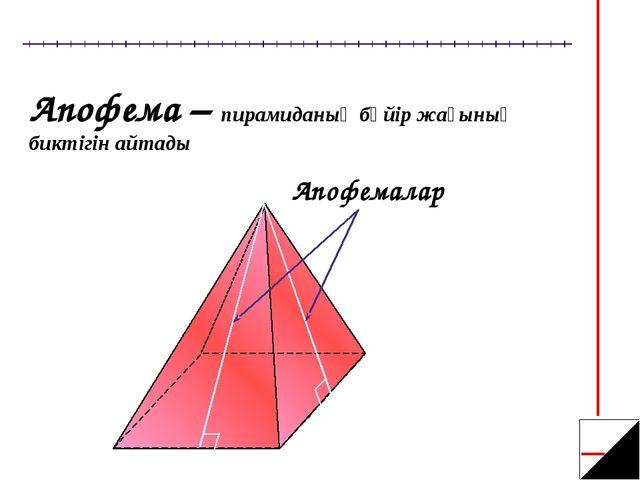 Апофема – пирамиданың бүйір жағының биктігін айтады Апофемалар