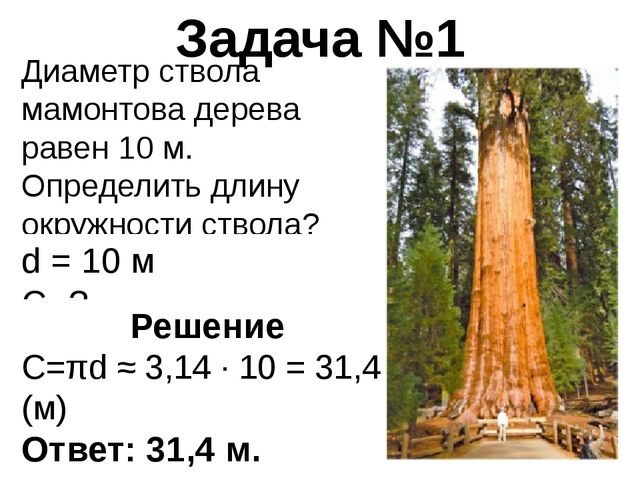 Диаметр ствола мамонтова дерева равен 10 м. Определить длину окружности ствол...