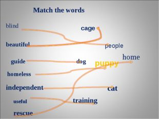 Match the words blind people beautiful cage guide dog homeless puppy independ