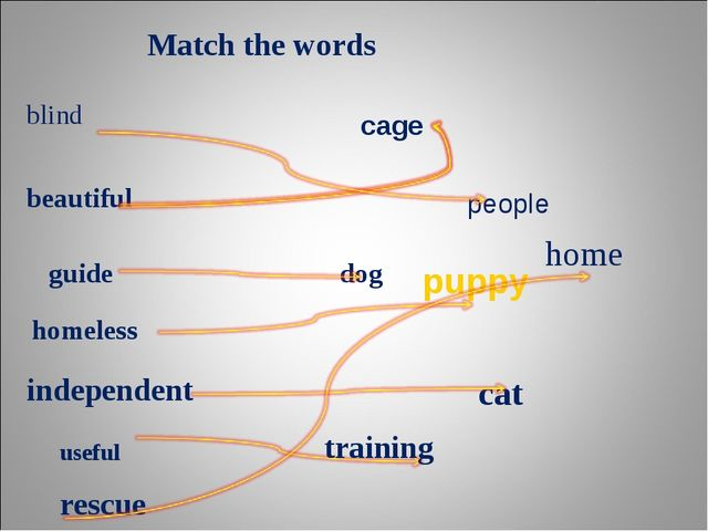Match the words blind people beautiful cage guide dog homeless puppy independ...