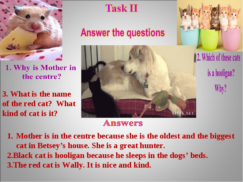 3. What is the name of the red cat? What kind of cat is it? Mother is in the...