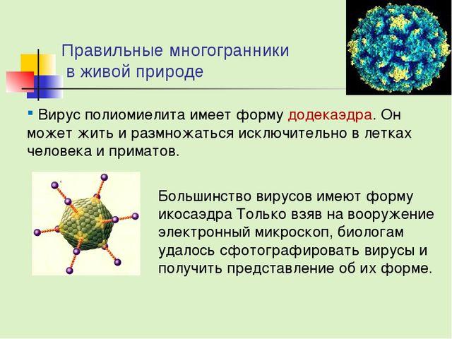Правильные многогранники в живой природе Вирус полиомиелита имеет форму додек...