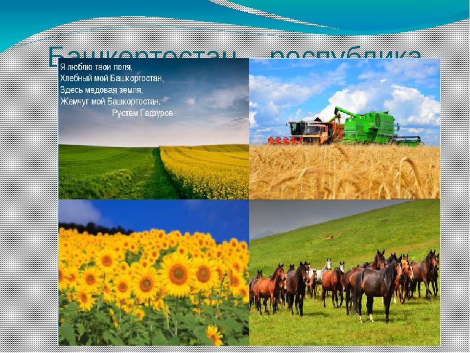 Башкортостан – республика хлебных полей.