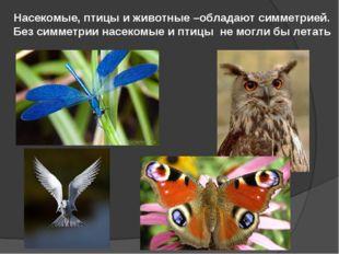 Насекомые, птицы и животные –обладают симметрией. Без симметрии насекомые и п