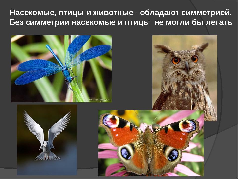 Насекомые, птицы и животные –обладают симметрией. Без симметрии насекомые и п...