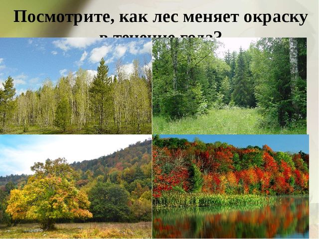 Посмотрите, как лес меняет окраску в течение года?