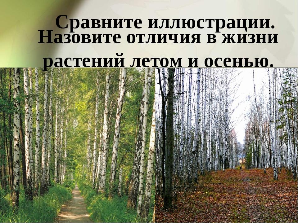 Сравните иллюстрации. Назовите отличия в жизни растений летом и осенью.