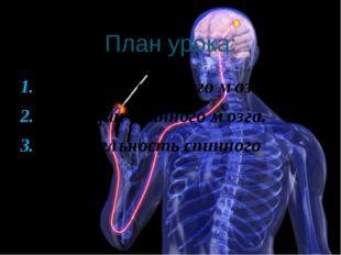 План урока: Строение спинного мозга. Функции спинного мозга. Деятельность спи