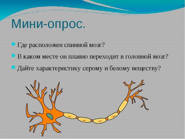 Мини-опрос. Где расположен спинной мозг? В каком месте он плавно переходит в...
