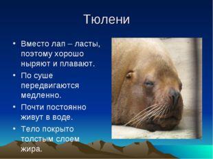 Тюлени Вместо лап – ласты, поэтому хорошо ныряют и плавают. По суше передвига