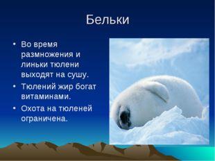Бельки Во время размножения и линьки тюлени выходят на сушу. Тюлений жир бога