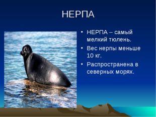 НЕРПА НЕРПА – самый мелкий тюлень. Вес нерпы меньше 10 кг. Распространена в с