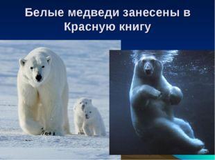 Белые медведи занесены в Красную книгу