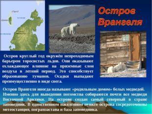 Остров Врангеля иногда называют «родильным домом» белых медведей. Именно здес
