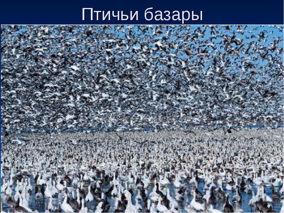 Птичьи базары
