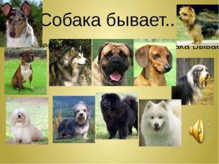 Собака бывает... Сергей и Татьяна Никитины - Собака Бывает Кусачей... (audiop