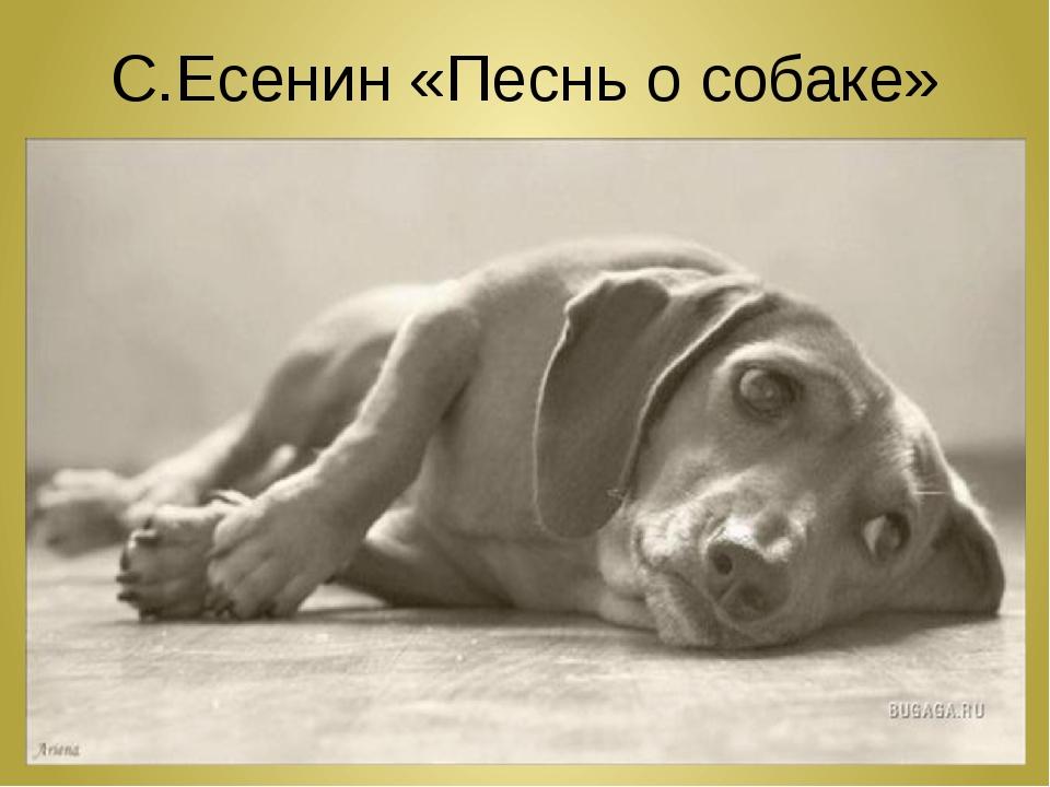 С.Есенин «Песнь о собаке»