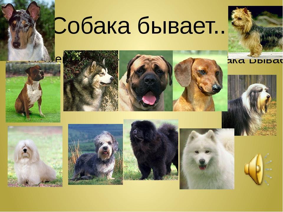 Собака бывает... Сергей и Татьяна Никитины - Собака Бывает Кусачей... (audiop...