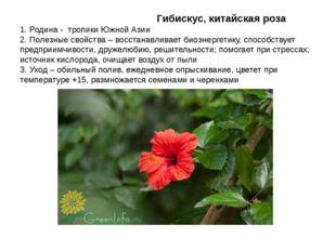 Гибискус, китайская роза 1. Родина - тропики Южной Азии 2. Полезные свойства
