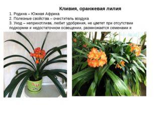 Кливия, оранжевая лилия 1. Родина – Южная Африка 2. Полезные свойства – очис