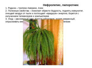 Нефролепис, папоротник 1. Родина – тропики Америки, Азии 2. Полезные свойств