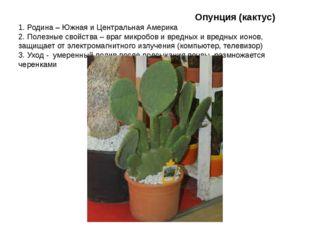 Опунция (кактус) 1. Родина – Южная и Центральная Америка 2. Полезные свойств