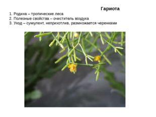 Гариота 1. Родина – тропические леса 2. Полезные свойства – очиститель возду