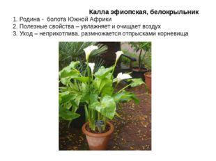 Калла эфиопская, белокрыльник 1. Родина - болота Южной Африки 2. Полезные св