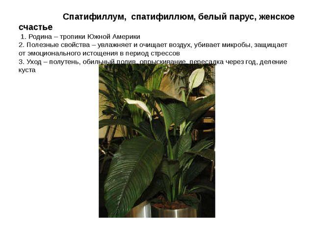 Спатифиллум, спатифиллюм, белый парус, женское счастье 1. Родина – тропики Ю...