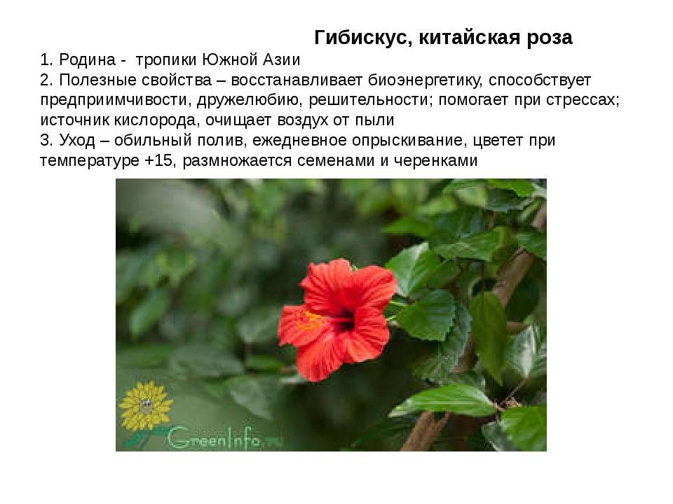 Гибискус, китайская роза 1. Родина - тропики Южной Азии 2. Полезные свойства...