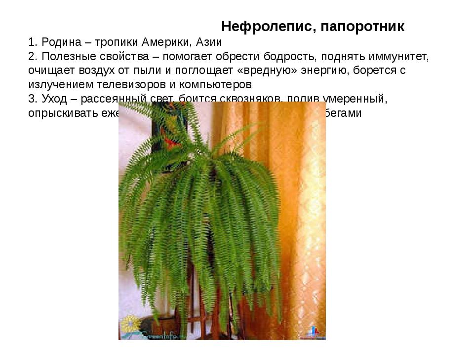 Нефролепис, папоротник 1. Родина – тропики Америки, Азии 2. Полезные свойств...