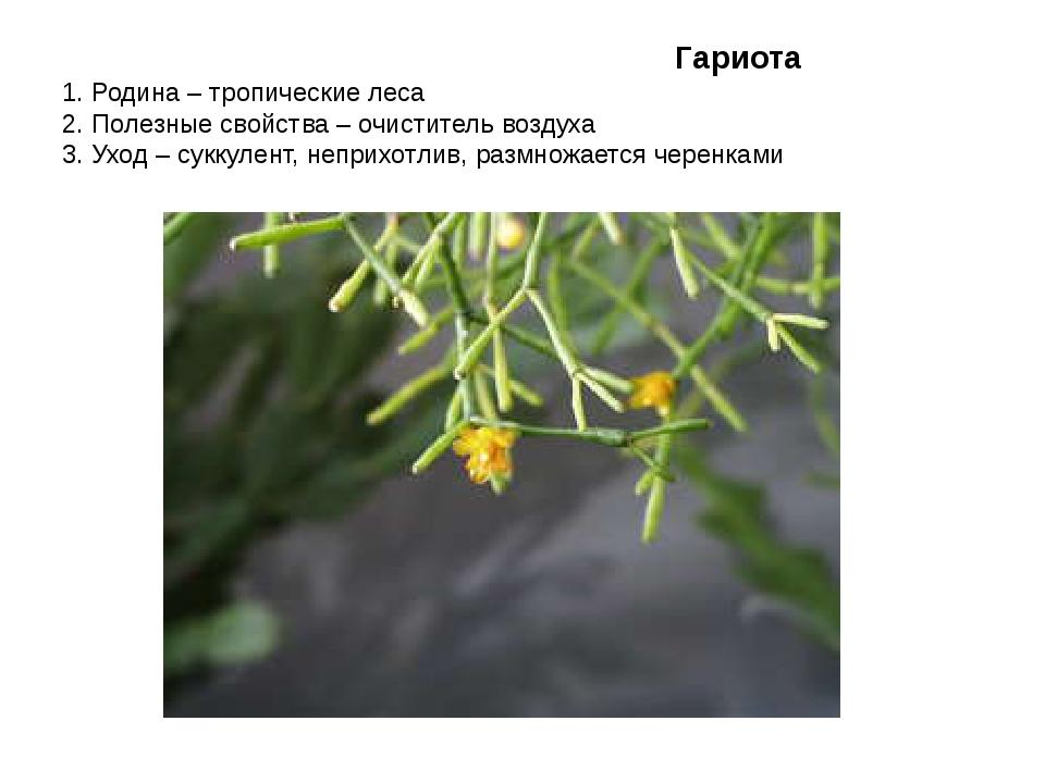 Гариота 1. Родина – тропические леса 2. Полезные свойства – очиститель возду...
