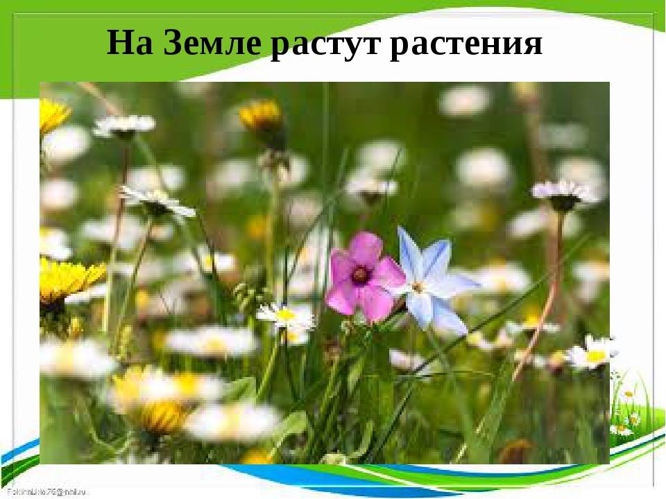 На Земле растут растения