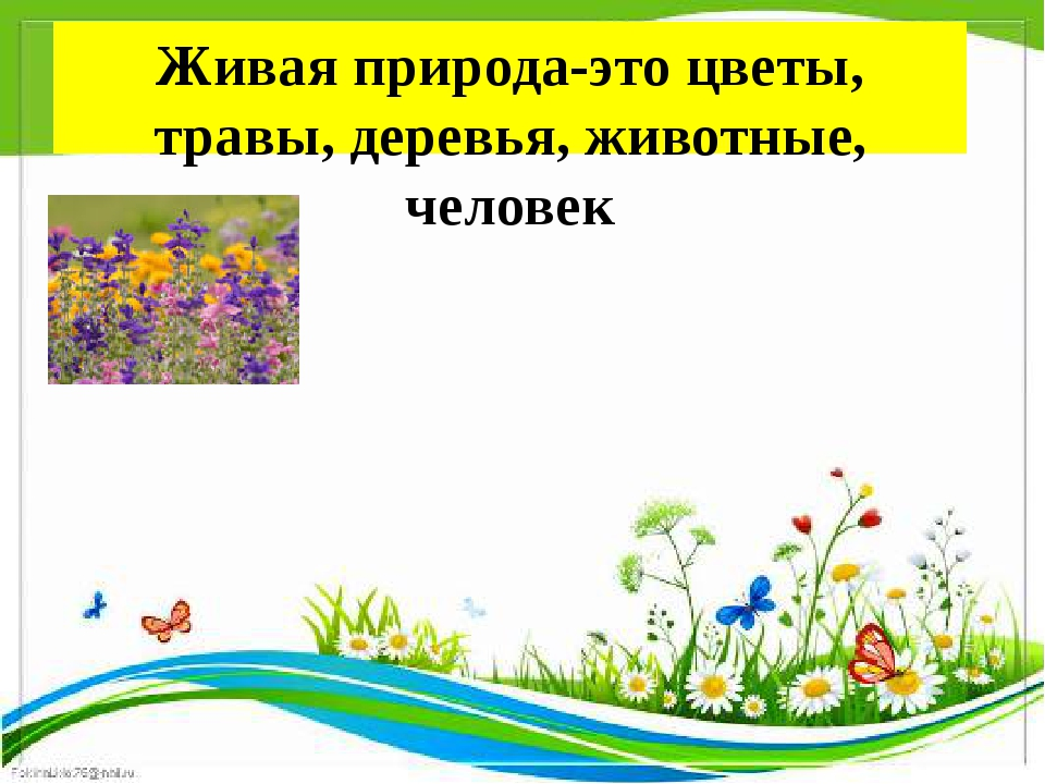 Живая природа-это цветы, травы, деревья, животные, человек