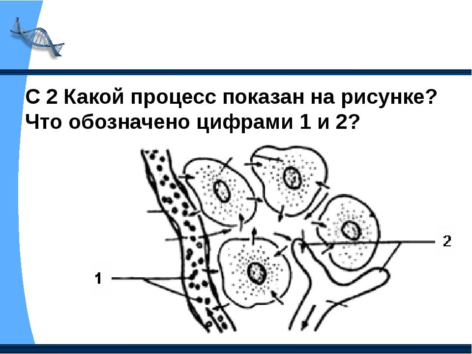 Какой процесс показан на рисунке что обозначено цифрами 1 и 2