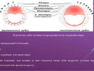 В целом все зубы человека подразделяются на следующие виды: резцы (центральны