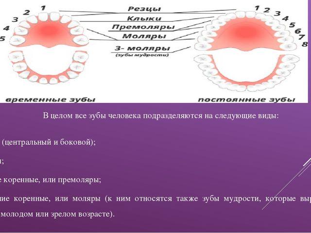 В целом все зубы человека подразделяются на следующие виды: резцы (центральны...