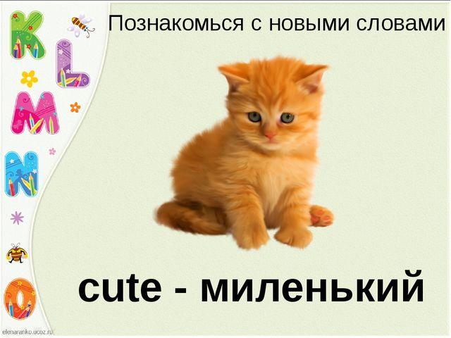 Познакомься с новыми словами cute - миленький