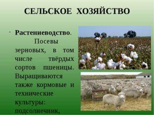 СЕЛЬСКОЕ ХОЗЯЙСТВО Растениеводство. Посевы зерновых, в том числе твёрдых сорт