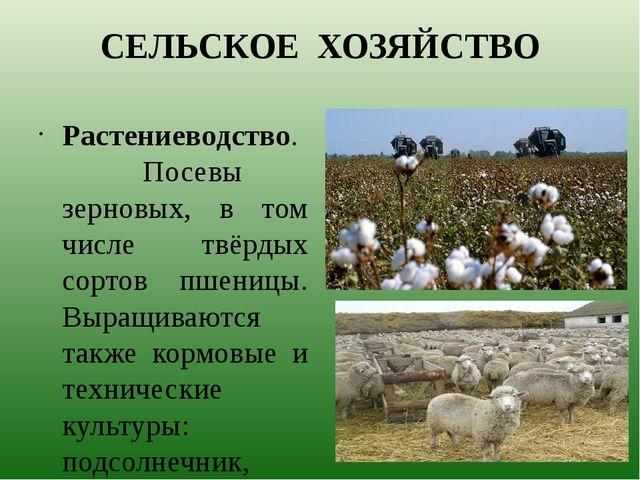 СЕЛЬСКОЕ ХОЗЯЙСТВО Растениеводство. Посевы зерновых, в том числе твёрдых сорт...