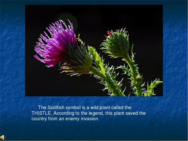 The Scottish symbol is a wild plant called the THISTLE. According to the leg...