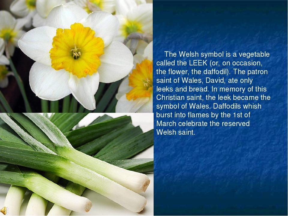 The Welsh symbol is a vegetable called the LEEK (or, on occasion, the flower...