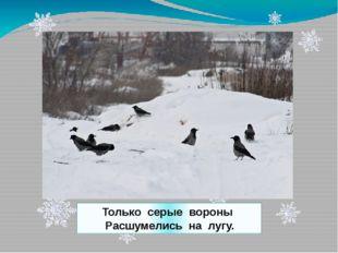 Только серые вороны Расшумелись на лугу.