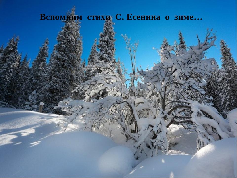 Вспомним стихи С. Есенина о зиме…